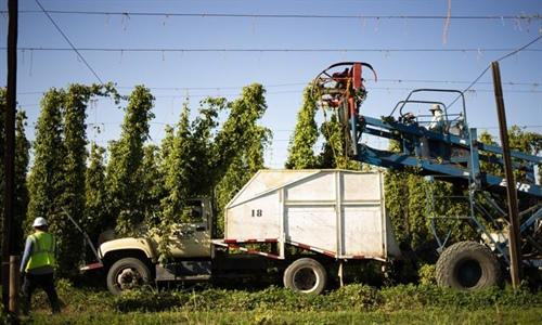 It Happened Here: Hops become a major cash crop for Yakima County