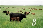 Pasture Management Workshop - Pasco